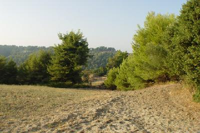 Недвижимость на Халкидики Кассандра. Участок за городом площадью 23000 кв.м.