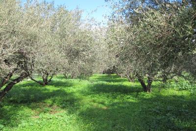 Недвижимость на о.Крит . Участок за городом площадью 1700 кв.м.