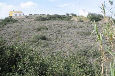Недвижимость на о.Крит . Участок за городом площадью 2855 кв.м.