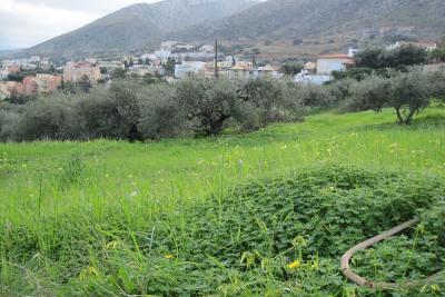 Недвижимость на о.Крит . Участок за городом площадью 1200 кв.м.